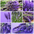 lavender flowers collage stock photo © nito