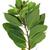 secas · laurel · folha · árvore · fundo · verde - foto stock © nito