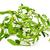 ヤドリギ · 液果類 · 赤 · 弓 · 孤立した · 白 - ストックフォト © nito