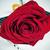 красную · розу · книга · любви · закрывается · красоту · зеленый - Сток-фото © nito