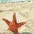 seastar on the sand of a beach stock photo © nito