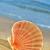 seashell stock photo © nito