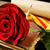wzrosła · książki · starej · książki · biały · kwiat - zdjęcia stock © nito