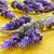 лаванды · цветы · саду · растущий · цветок · здоровья - Сток-фото © nito