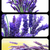 lavender collage stock photo © nito
