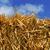 straw bale stock photo © nito