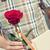 piros · rózsa · könyv · szent · nap · Spanyolország · hagyományos - stock fotó © nito