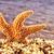 цапля · острове · глаза · морем · животного - Сток-фото © nito