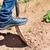 молодые · картофеля · растений · ребенка · небольшой · области - Сток-фото © nito