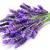 lavanda · flores · branco · médico · fundo - foto stock © nito
