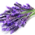 лаванды · цветы · белый · медицинской · фон - Сток-фото © nito