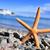 starfish · concha · pedras · branco · água · peixe - foto stock © nito