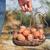 cesta · huevos · vintage · alambre · sesión - foto stock © nito