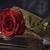 dom · rosa · rosa · vermelha · dourado - foto stock © nito