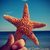 starfish on the beach with a retro effect stock photo © nito