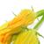 abobrinha · abobrinha · flores · branco - foto stock © nito