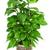 pénz · növény · izolált · fehér · üzlet · fa - stock fotó © nito