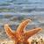 orange starfish in the seashore stock photo © nito