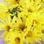 黄色 · 紫色 · 画像 · 太陽 · 白 - ストックフォト © nito
