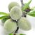 walnoot · blad · vruchten · noten · groene · bladeren - stockfoto © nito