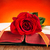 Rose · Red · libro · amor · aumentó · belleza · verde - foto stock © nito