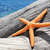 orange starfish on an old washed out tree trunk on the beach stock photo © nito