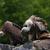 the vultures stock photo © njaj