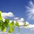 зеленый · лист · изолированный · белый · лист · фон · зеленый - Сток-фото © njaj