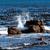 água · África · do · Sul · natureza · pássaro · pernas · África - foto stock © njaj