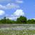 natürlichen · Sommer · Gänseblümchen · Blumen · Gras · schönen - stock foto © njaj