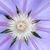 közelkép · fotó · tavasz · természet · szépség · növény - stock fotó © njaj