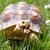 africano · tartaruga · isolado · branco · natureza · animal - foto stock © nneirda