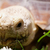africano · tartaruga · bonitinho · tartaruga · grama · verde - foto stock © nneirda