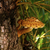 ツリー · 菌 · 秋 · 森林 · 草 · ドロップ - ストックフォト © nneirda