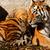 tigris · anyu · állatkert · medvebocs · napos · fotó - stock fotó © Nneirda