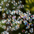 powietrza · Bańka · niebieski · zielonym · tle · przezroczysty · powierzchnia - zdjęcia stock © nneirda
