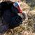 turkey in nature stock photo © nneirda
