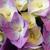 ピンク · 咲く · マクロ · クローズアップ · ショット - ストックフォト © nneirda
