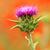 çiçek · beyaz · doğa · yaz · renk - stok fotoğraf © nneirda