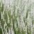 Bush · floraison · lavande · été · domaine · nature - photo stock © nneirda
