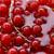 vermelho · atual · foto · tigela · isolado · branco - foto stock © nneirda