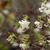 roze · bloei · boom · natuur · voorjaar · Frankrijk - stockfoto © nneirda