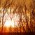 fa · sziluett · drámai · naplemente · Afrika · Kenya - stock fotó © nneirda