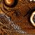 részletes · makró · trópusi · pillangó · szárny · barna - stock fotó © nneirda