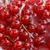rosso · attuale · foto · ciotola · isolato · bianco - foto d'archivio © nneirda