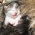 recém-nascido · gatinhos · gatinho · branco · cor · gato - foto stock © nneirda