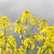 campo · cielo · nubes · flor · primavera · sol - foto stock © nneirda