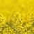 フィールド · 空 · 雲 · 花 · ツリー · 春 - ストックフォト © nneirda