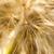 diente · de · león · semillas · manana · luz · del · sol · central · naturaleza - foto stock © nneirda