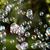 levegő · buborék · kék · zöld · háttér · átlátszó · felület - stock fotó © nneirda